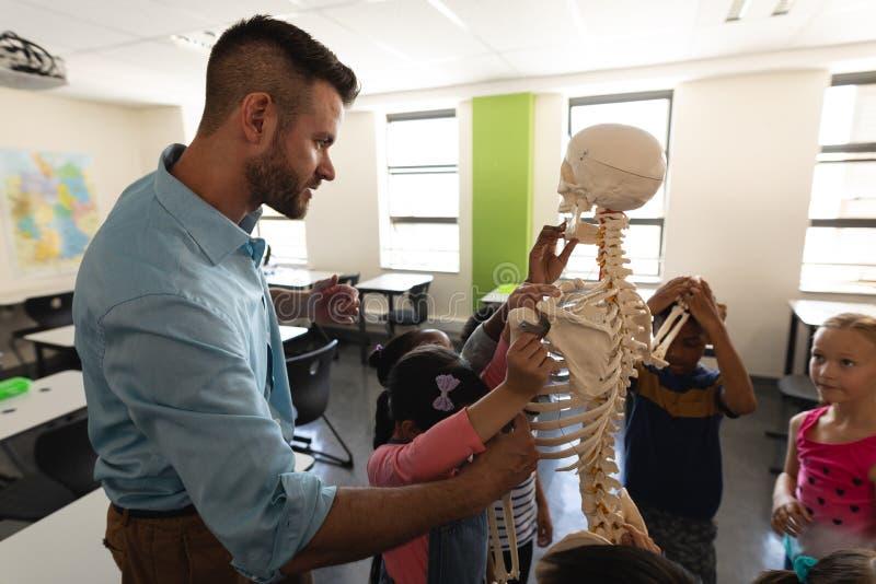 Seitenansicht des männlichen Lehrers Skelettmodell im Klassenzimmer erklärend lizenzfreies stockbild
