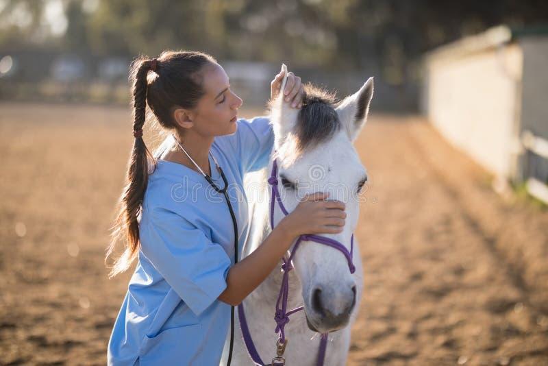 Seitenansicht des weiblichen Tierarztes Pferdeohren überprüfend lizenzfreies stockfoto