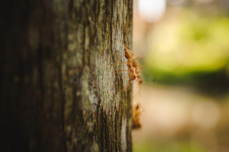 Seitenansicht Weaver Antss über Baum stockfotos