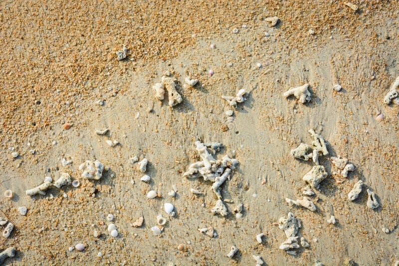 Seixo, escudos do mar e corais quebrados no fundo amarelo tropical da areia da praia fotos de stock