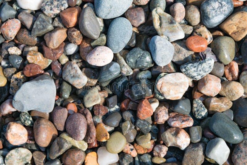 Seixos, pedras, rochas e alga na praia foto de stock