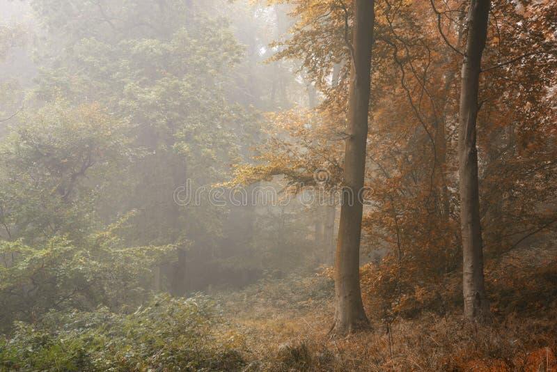 Seizoenen die die van de Zomer in Autumn Fall-concept veranderen in o wordt getoond royalty-vrije stock afbeeldingen