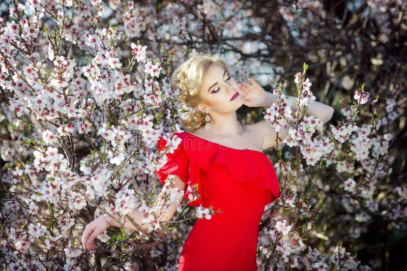 Seizoengebonden eigenschap, schoonheid en manier Mooie vrouw dichtbij abrikozen bloeiende boom stock afbeeldingen