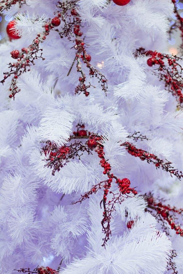 Seizoengebonden witte de spartak van de Kerstmiswinter met rode lijsterbes berrie stock foto's