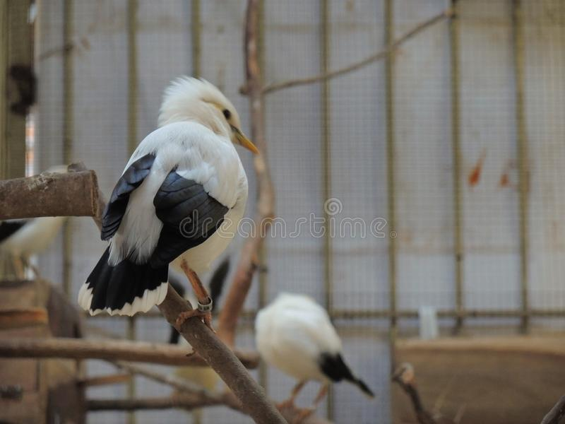 Seizure of endangered species protected by java forest police. Dozens of seagulls and some javan hawks and alap-alap birds are secured by javanese forest police stock image