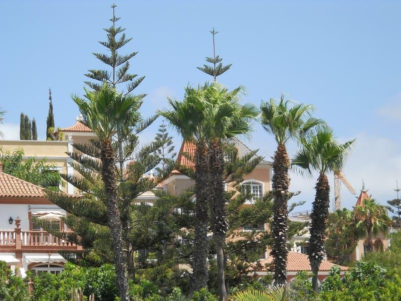 Sejour Tenerife arkivfoto