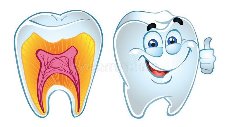 sekci uśmiechnięty zębów ząb ilustracji