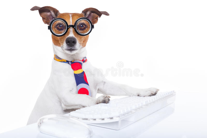 Sekreterarehund royaltyfri fotografi
