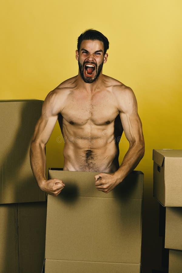 Seksualiteit en leveringsconcept Macho met varkenshaar en agressief gezicht die spieren tonen royalty-vrije stock foto's