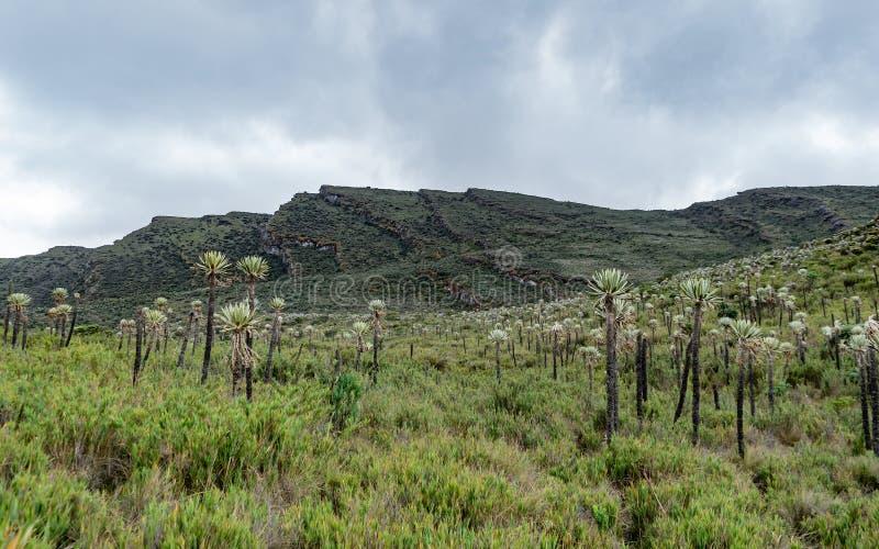 Sektor der Siecha-Lagunen im Chingaza-paramo B lizenzfreie stockfotos