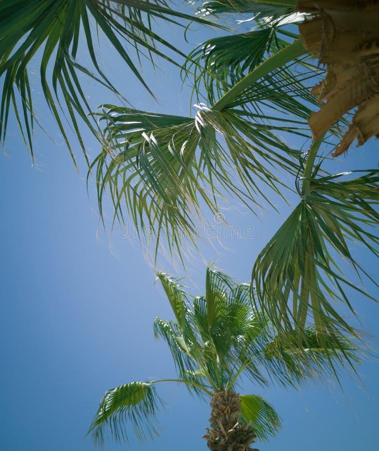 Sektor element pasiasty barwiony parasol i gałąź, palma opuszczamy tłu czystego niebo obraz stock