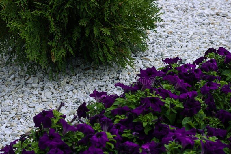 Sektoren in der Landschaftsdekoration Kies von weißen Kieseln und von Grünpflanzen mit Blumen Japanische Gartenbearbeitungskultur stockfotos