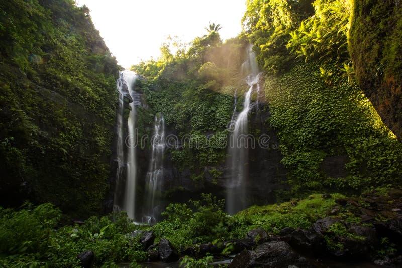 Sekumpul瀑布在巴厘岛的,印度尼西亚密林 免版税图库摄影