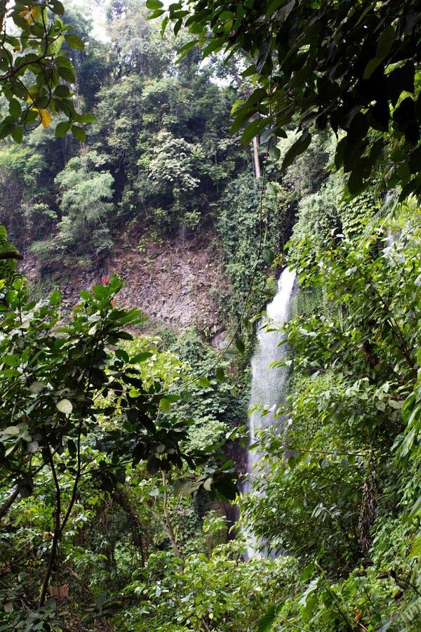 Sekumpul瀑布在巴厘岛 免版税库存照片