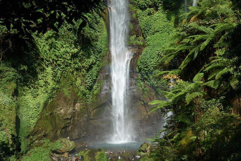 Sekumpul siklawa w Bali otaczał tropikalnym lasem obrazy stock