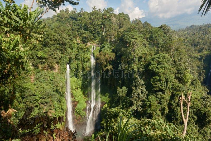 Sekumpul siklawa w Bali otaczał tropikalnym lasem fotografia royalty free
