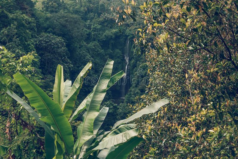 Sekumpul waterfall in the green rainforest of Bali island, Indonesia. Asia stock photos