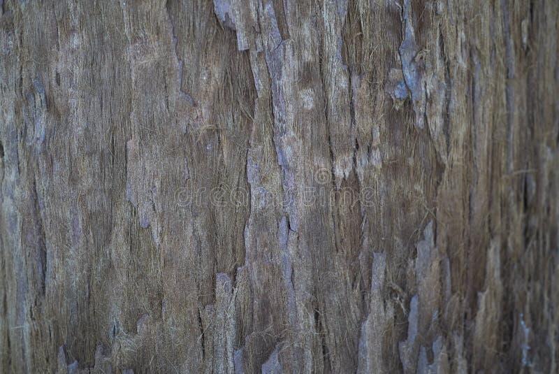Sekwoj sempervirens barkentyna fotografia stock