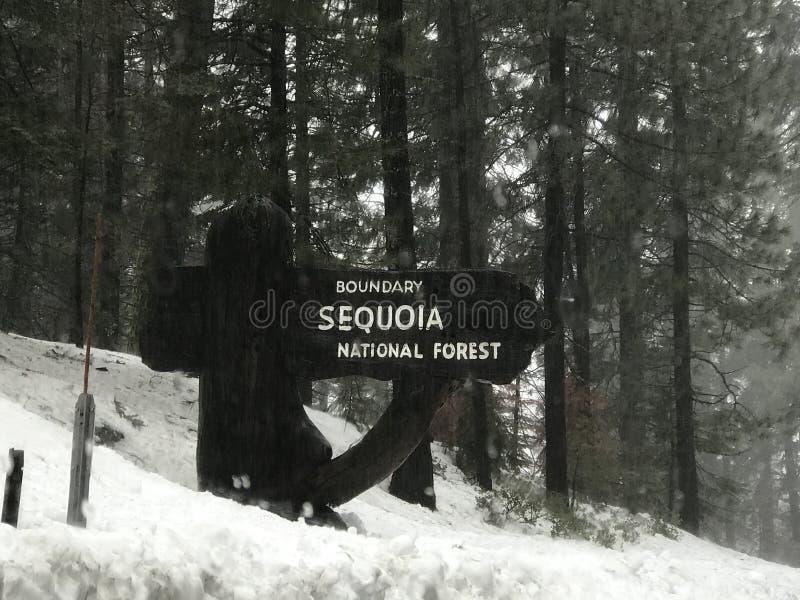Sekwoja las państwowy zdjęcia stock