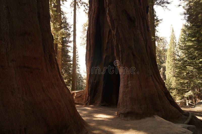 Sekwoja park narodowy, Kalifornia, usa zdjęcie royalty free