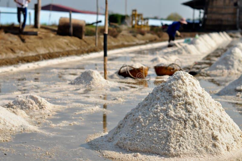Sel cultivant la Thaïlande photographie stock