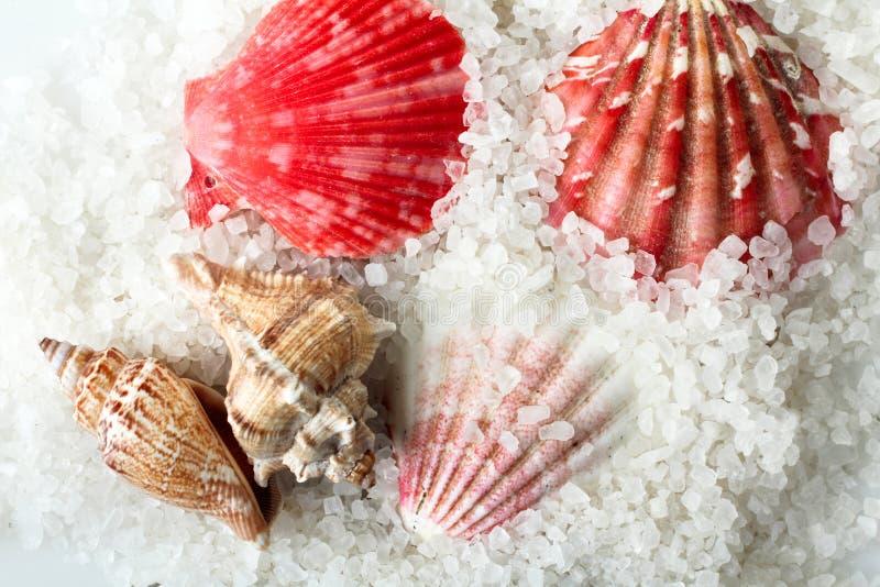 Sel et coquillages de mer photographie stock libre de droits