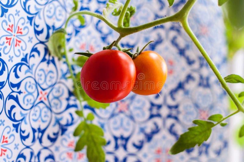 Download Selbst Gemachte Tomate Auf Einer Niederlassung Stockbild - Bild von gekocht, kirsche: 96935501