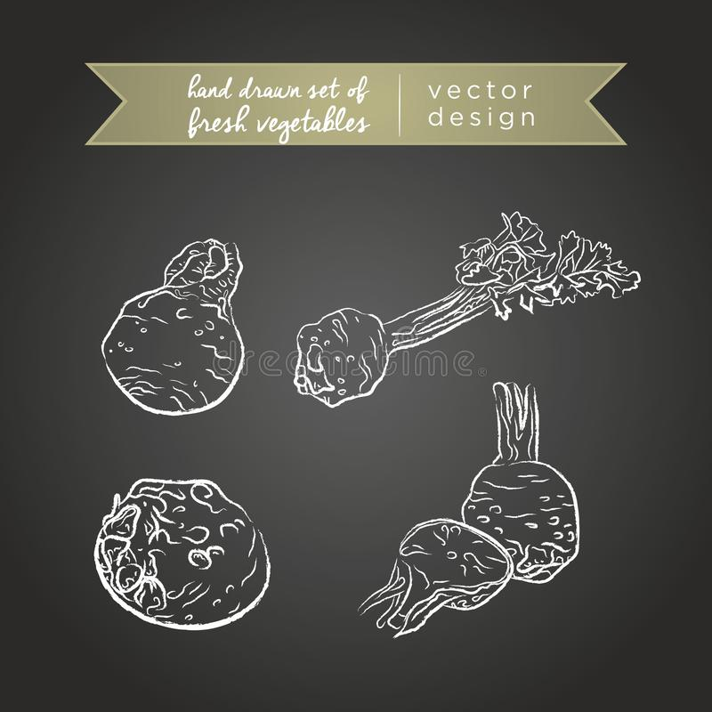 selderie Reeks verse groenten, geheel, half en gebeten met blad Vector illustratie Geïsoleerd op bord vector illustratie
