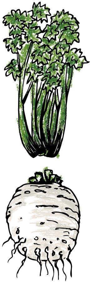 Selderie - wortel en bladeren stock illustratie