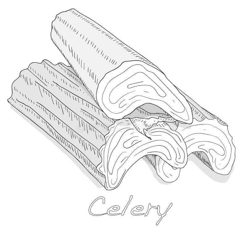 Selderie zwart-wit vectorillustratie die op witte backgrond wordt geïsoleerd stock illustratie