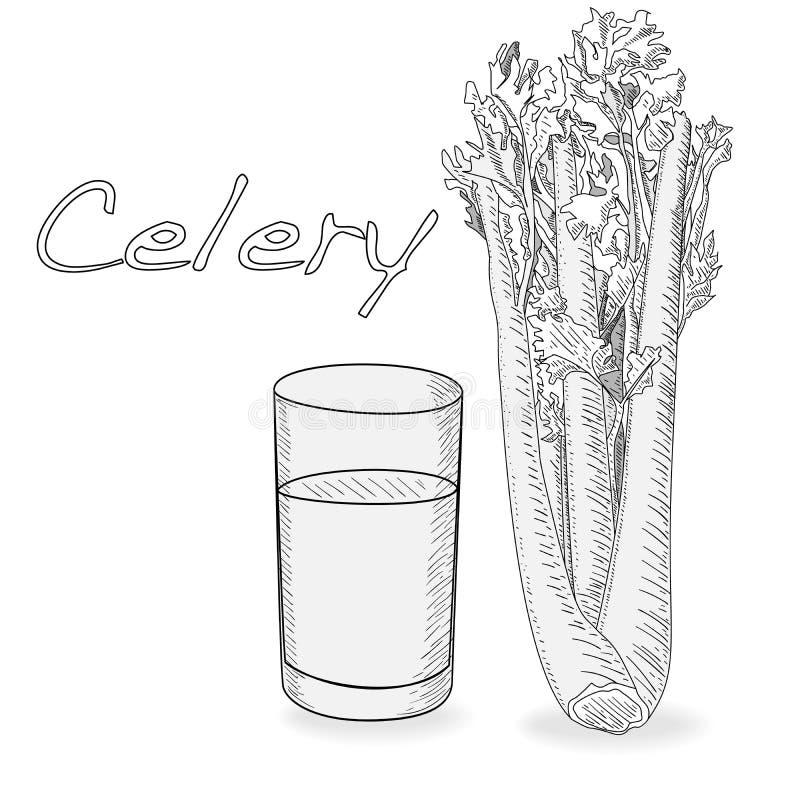 Selderie zwart-wit vectorillustratie die op witte backgrond wordt geïsoleerd vector illustratie