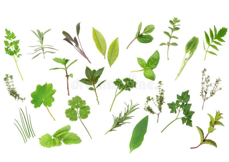Seleção da folha da erva imagem de stock
