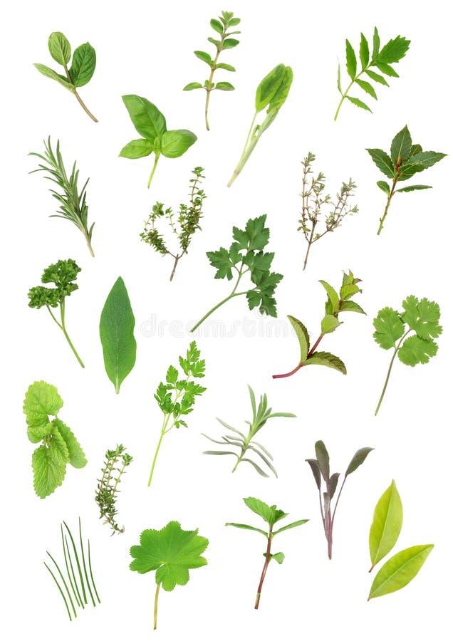 Seleção da folha da erva imagens de stock