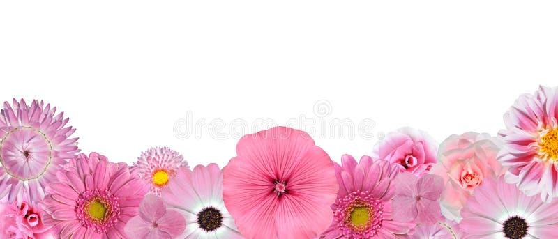 Seleção da vária fileira cor-de-rosa das flores brancas foto de stock royalty free
