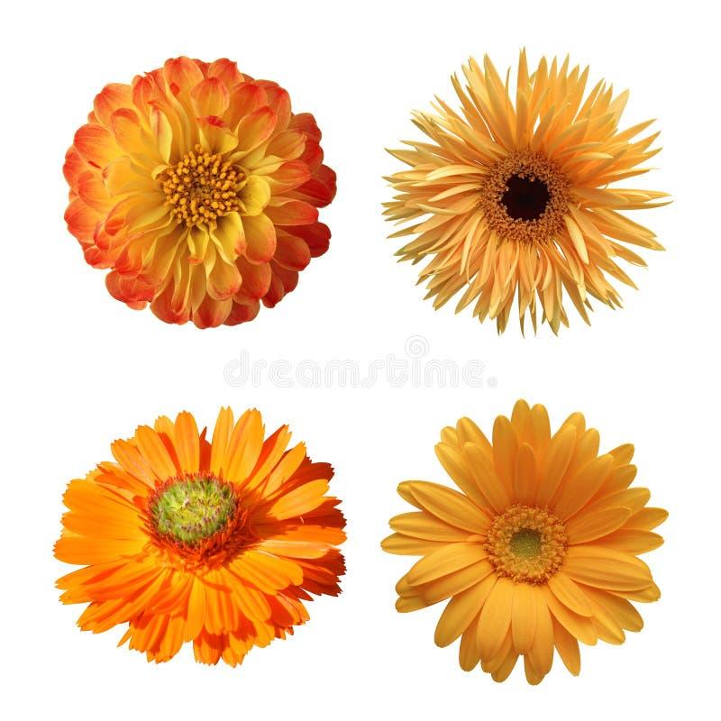 Seleção das várias flores isoladas imagens de stock