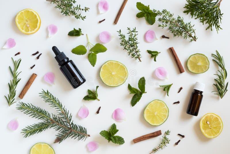 Seleção de óleos essenciais e de ervas em um fundo branco imagens de stock