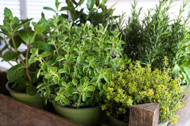 Seleção de ervas culinárias frescas imagens de stock