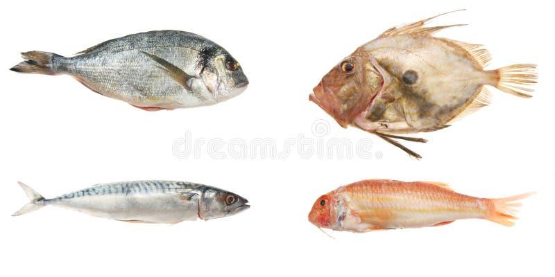Seleção de quatro peixes frescos imagem de stock royalty free