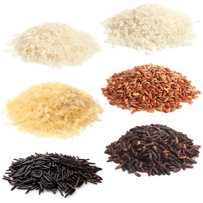 Seleção do vário arroz fotografia de stock royalty free