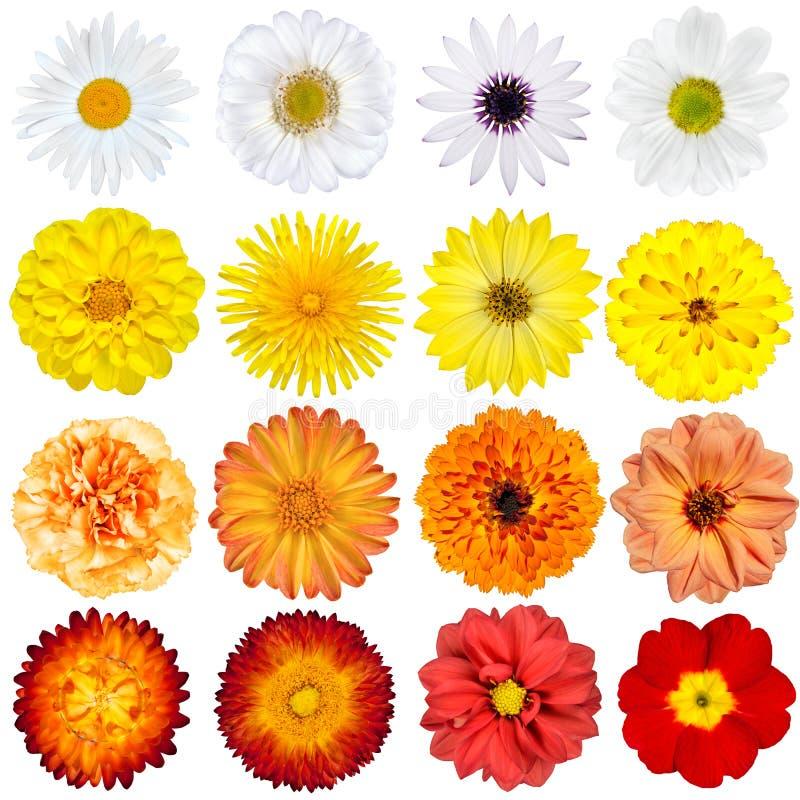 Seleção grande das várias flores isoladas foto de stock royalty free