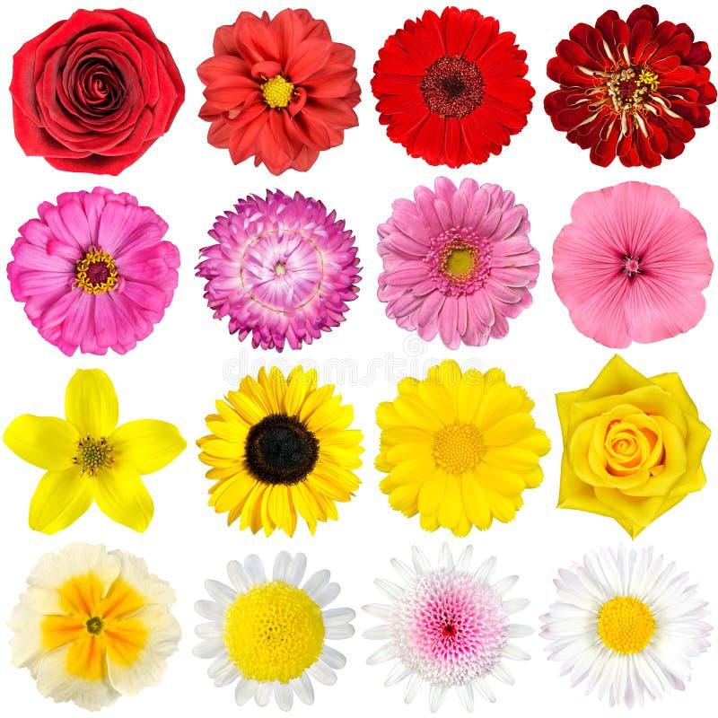 Seleção grande das várias flores isoladas no branco fotografia de stock