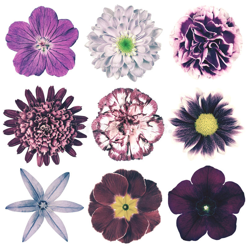 Seleção retro das flores do vário vintage isolada no branco imagem de stock royalty free