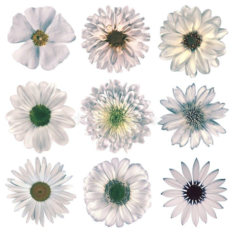 Seleção retro das flores do vário vintage isolada no branco fotos de stock royalty free