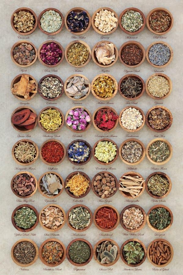 Selección alternativa de la medicina herbaria fotos de archivo