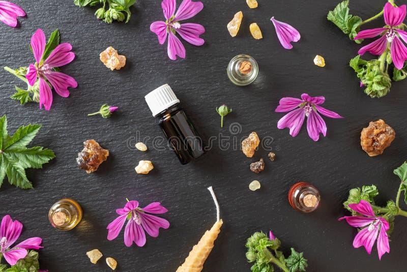 Selecci?n de aceites esenciales con mirra, incienso y flores frescas de la malva foto de archivo