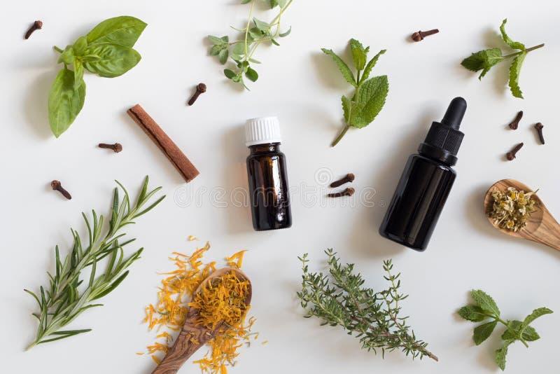 Selección de aceites esenciales y de hierbas en un fondo blanco imagen de archivo libre de regalías