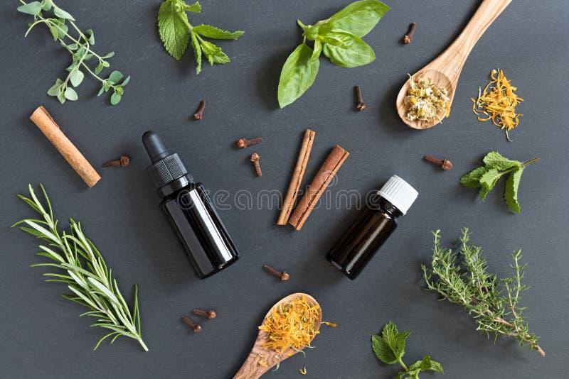 Selección de aceites esenciales y de hierbas en un fondo oscuro foto de archivo