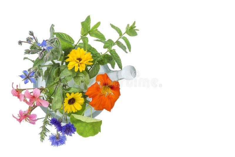 Selección de la flor y de la hierba de Naturopathic en un mortero con la maja sobre el fondo blanco fotos de archivo libres de regalías