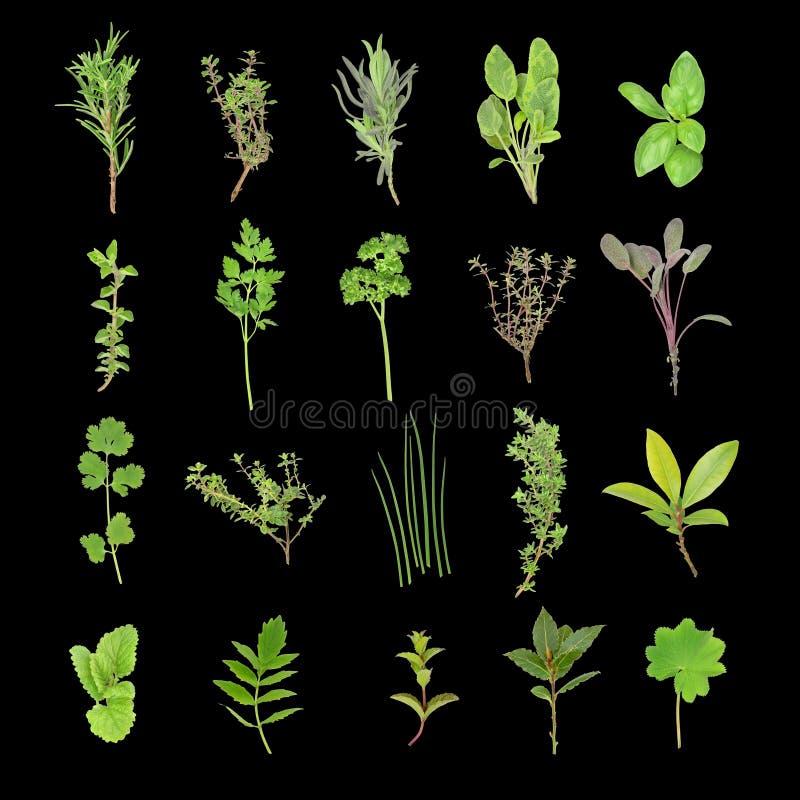Selección de la hoja de la hierba ilustración del vector
