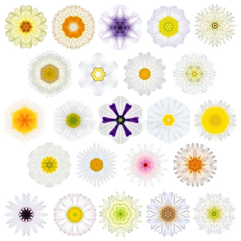 Selección enorme de diversa Mandala Flowers Isolated concéntrica en blanco fotografía de archivo